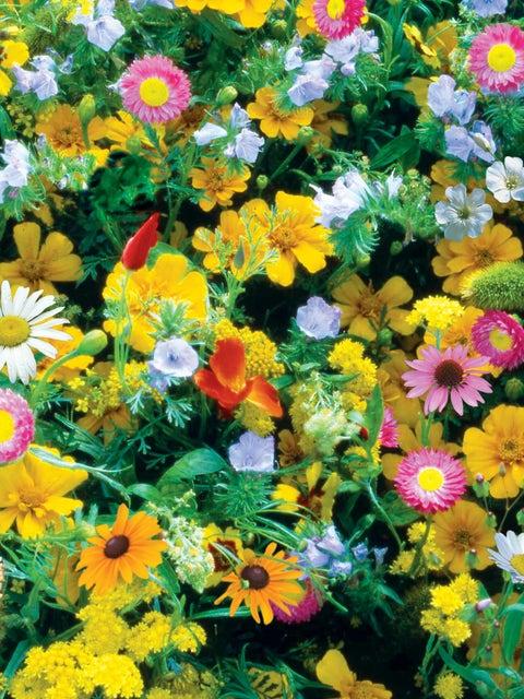 Wildflowers, Perennial Mix
