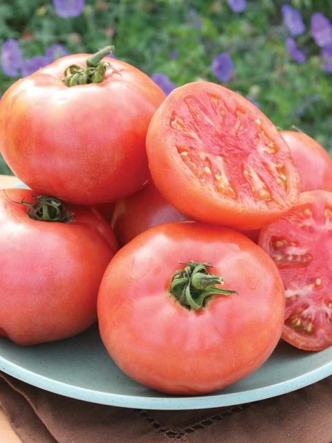 Tomato, Pink Pounder Hybrid