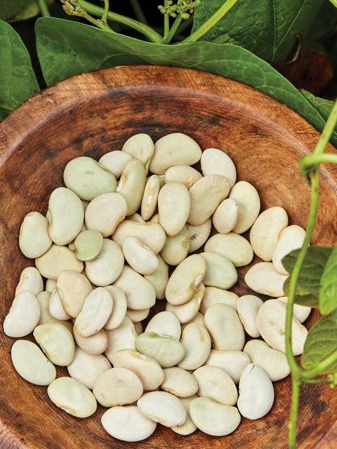 Bean, Pole, Lima King of the Garden