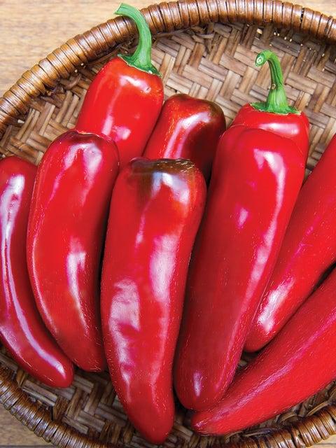 Pepper, Hot, Born to be Mild Hybrid