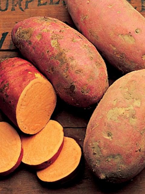 Sweet Potato, Georgia Jet