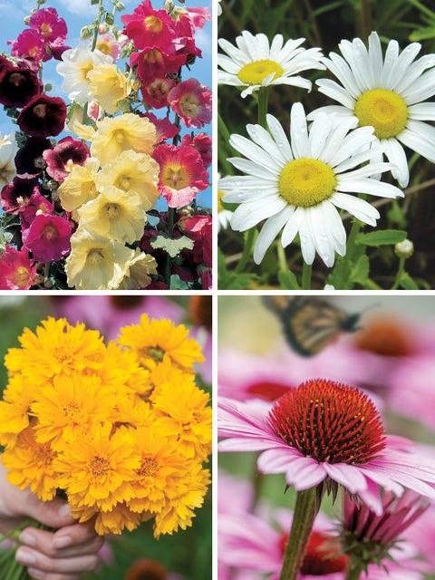 Sunny Perennial Cut Flower Garden