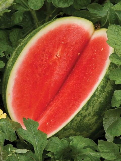 Watermelon, Red Ruby Hybrid