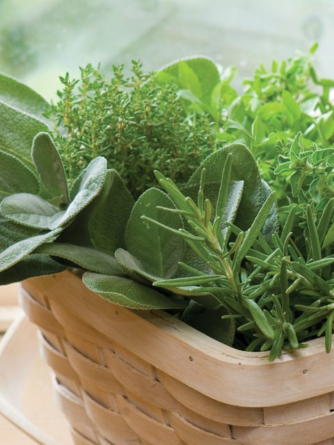 Herb Collection, Culinary Classics