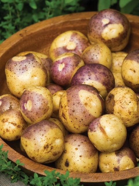 Potato, Masquerade
