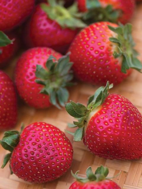 Strawberry, Evie-2