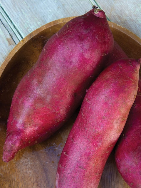 Sweet Potato, Murasaki