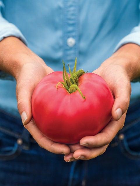 Tomato, Medium Rare Hybrid