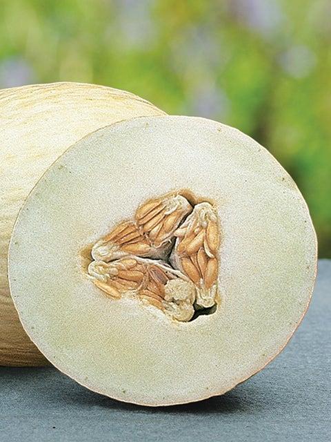 Melon, Galia Regalia Hybrid