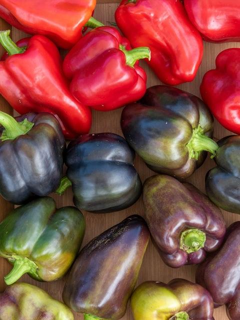 Pepper, Sweet, Pinot Noir Hybrid