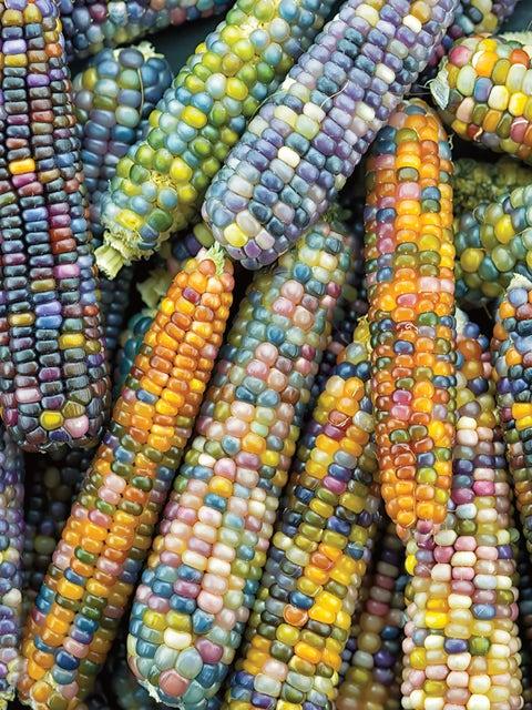 Corn, Ornamental, Glass Gem