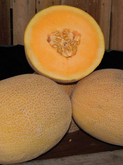 Melon, Ananas, Coquette Hybrid