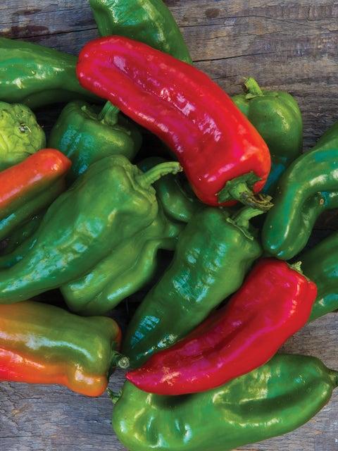 Pepper, Bush Belle Hybrid