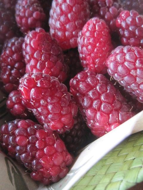 Tayberry, Blackberry-Raspberry