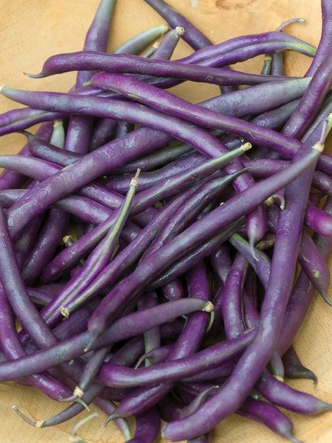Bean, Pole Purple Podded Organic
