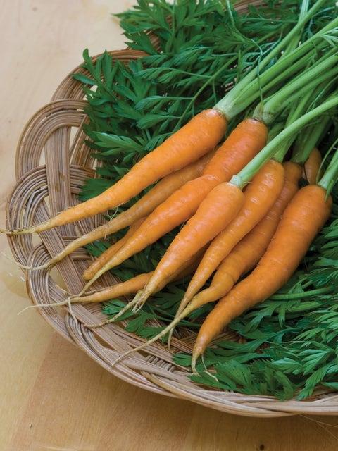 Carrot, Little Finger