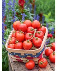 Tomato, Fourth of July Hybrid
