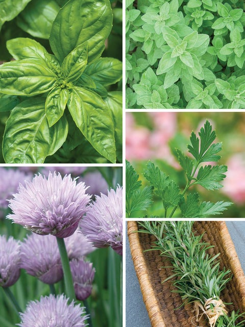 Herb Collection, Italiano