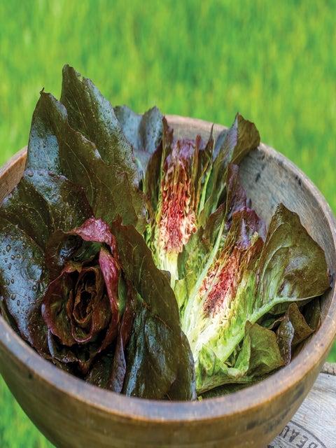 Lettuce, Ruby Glow