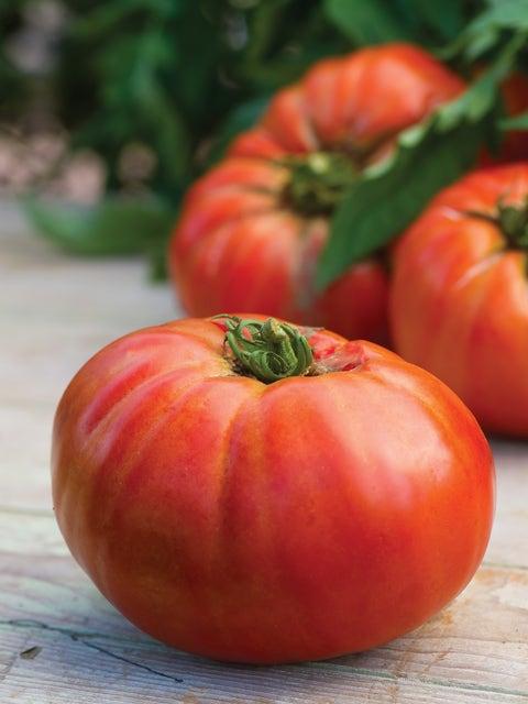 Tomato, Porterhouse Hybrid