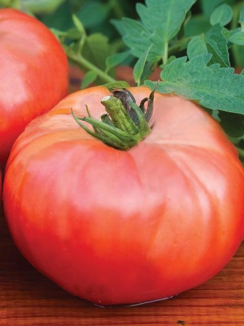 Tomato, Brandywine Red Organic