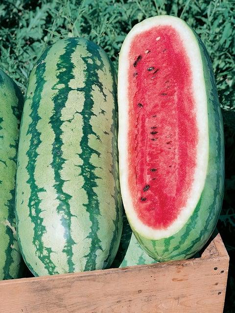 Watermelon, Georgia Rattlesnake