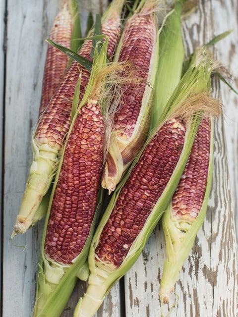 Corn, Ruby Queen Hybrid