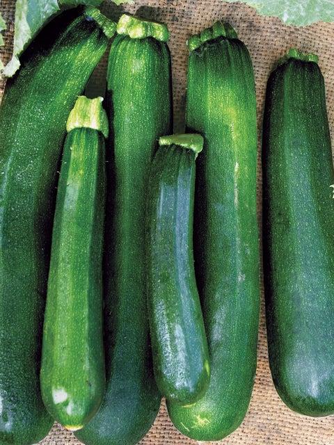 Squash, Zucchini, Black Beauty