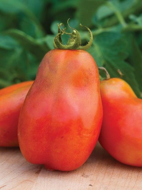 Tomato, Polish Linguisa