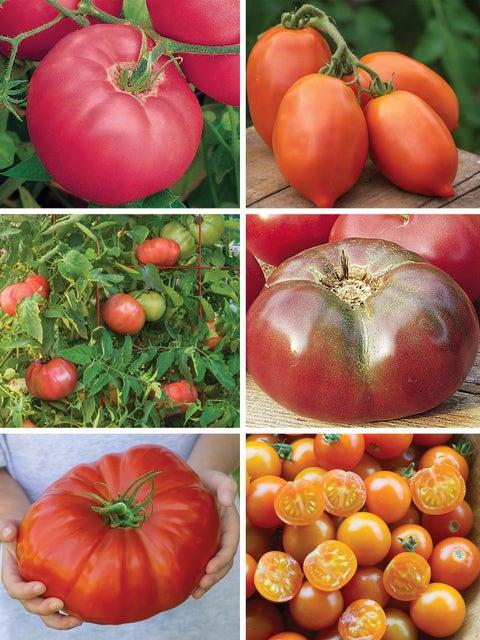 Tomato Lovers Garden