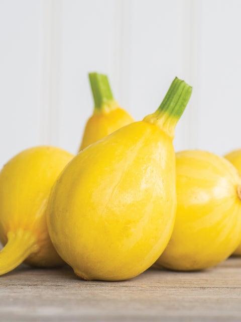 Squash, Summer, Lemon Drop Hybrid