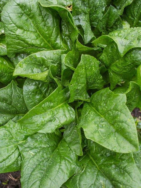 Spinach, A La Carte Hybrid
