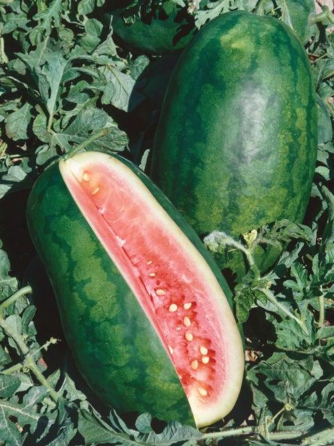 Watermelon, Congo