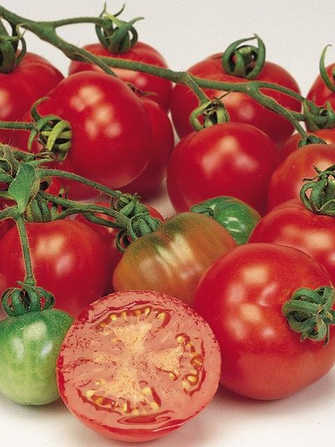 Tomato, Bloody Butcher