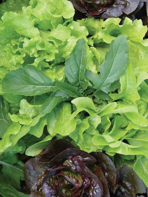Mesclun, Salad Fresh Cutting Mix