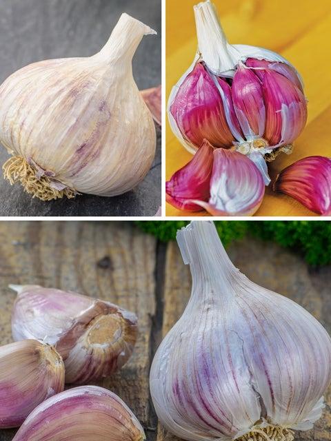 Favorite Northern Garlic Collection
