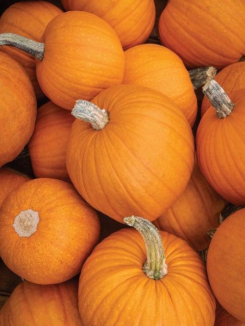 Pumpkin, Small Sugar