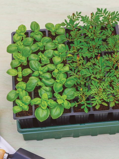72 Cell Self-Watering Ultimate Growing System