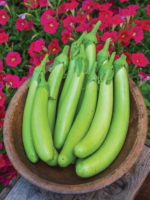 Eggplant, Green Knight Hybrid