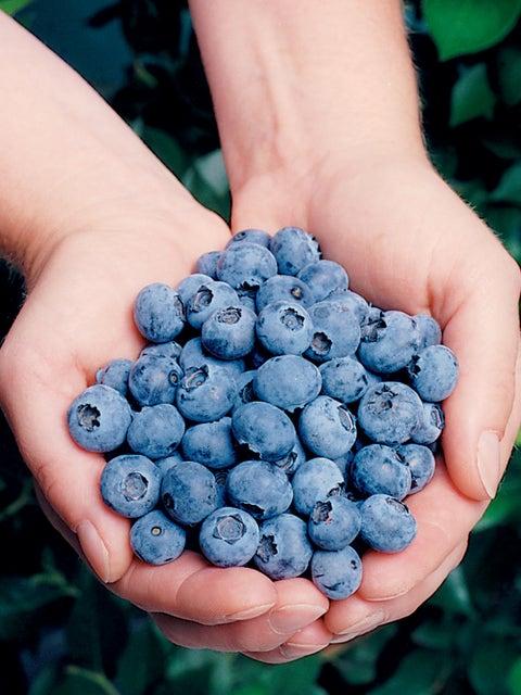 Blueberry, Elliott