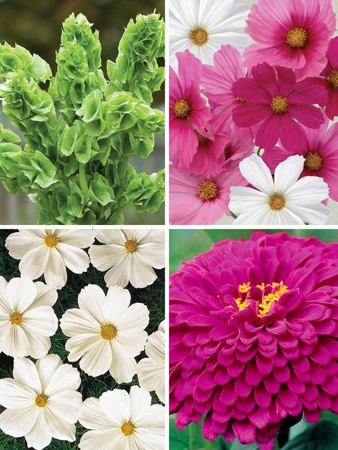 Bright & Bold Cut Flower Garden