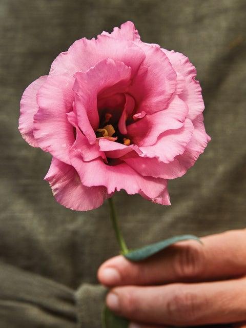 Lisianthus, Balboa  Rose