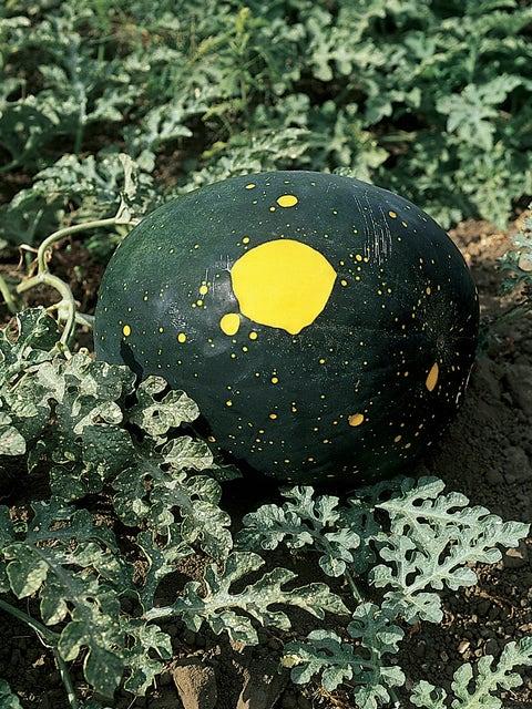 Watermelon, Moon And Stars
