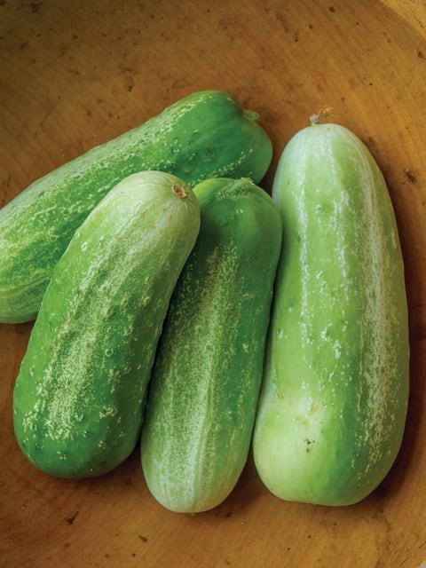 Cucumber, Picklebush