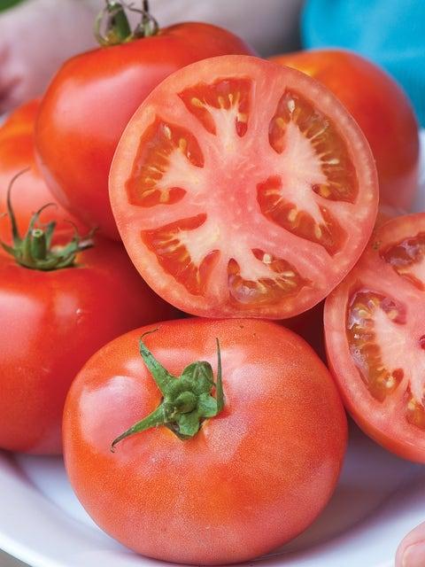 Tomato, Burpees Early Pick VF Hybrid