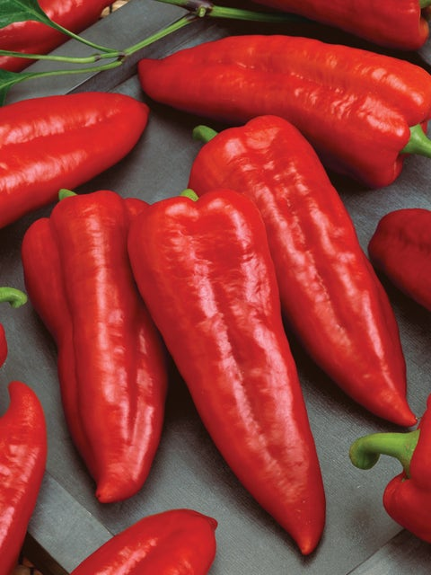 Pepper, Sweet, Marconi Rosso Organic