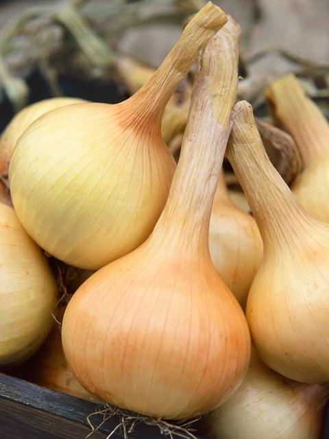 Onion, Walla Walla Sweet