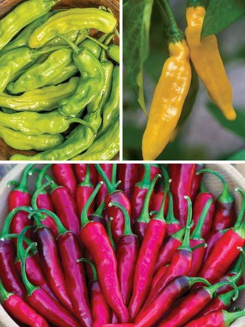 Hot Peppers Collection