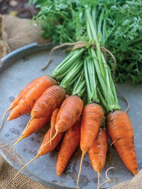 Carrot, Caracas Hybrid