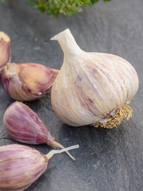 Garlic, Purple Glazer